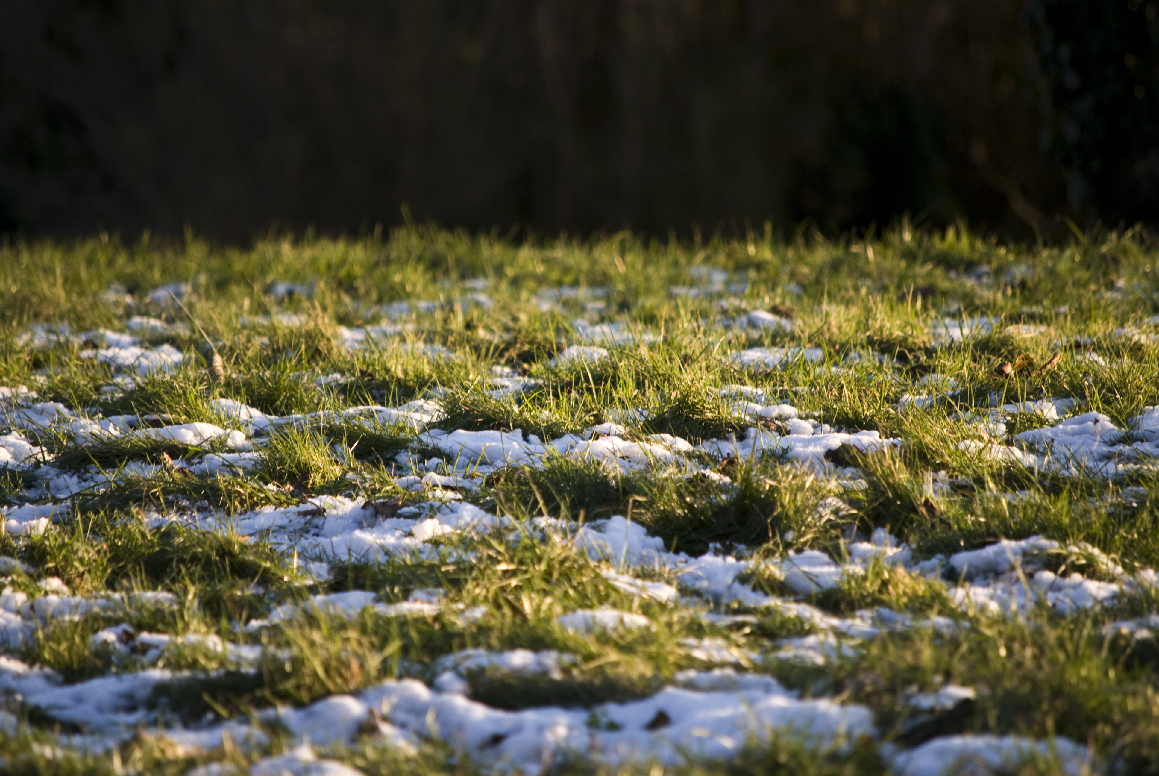 snow on the grass