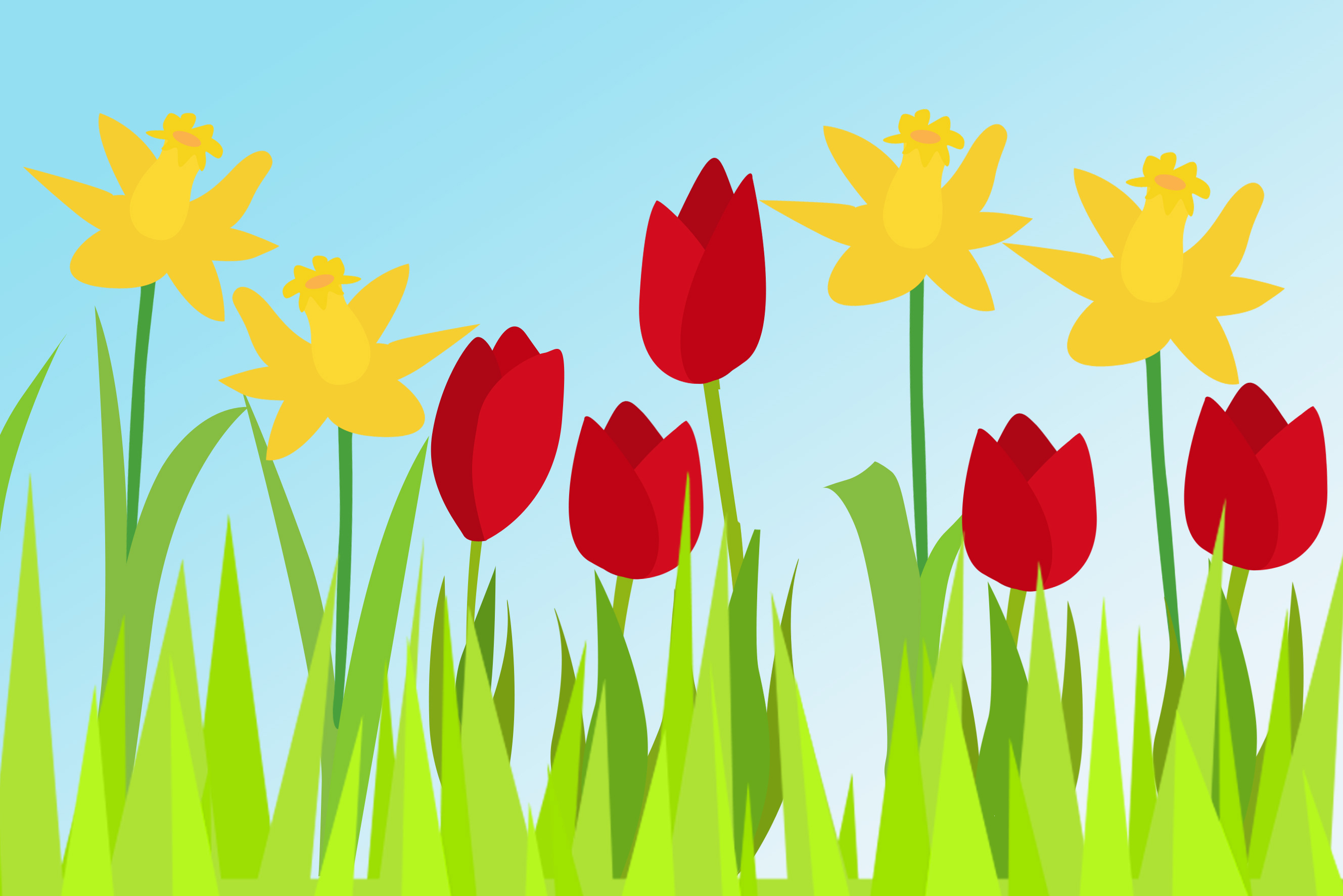Daffodils And Tulips Free Early Years Primary Teaching Resources