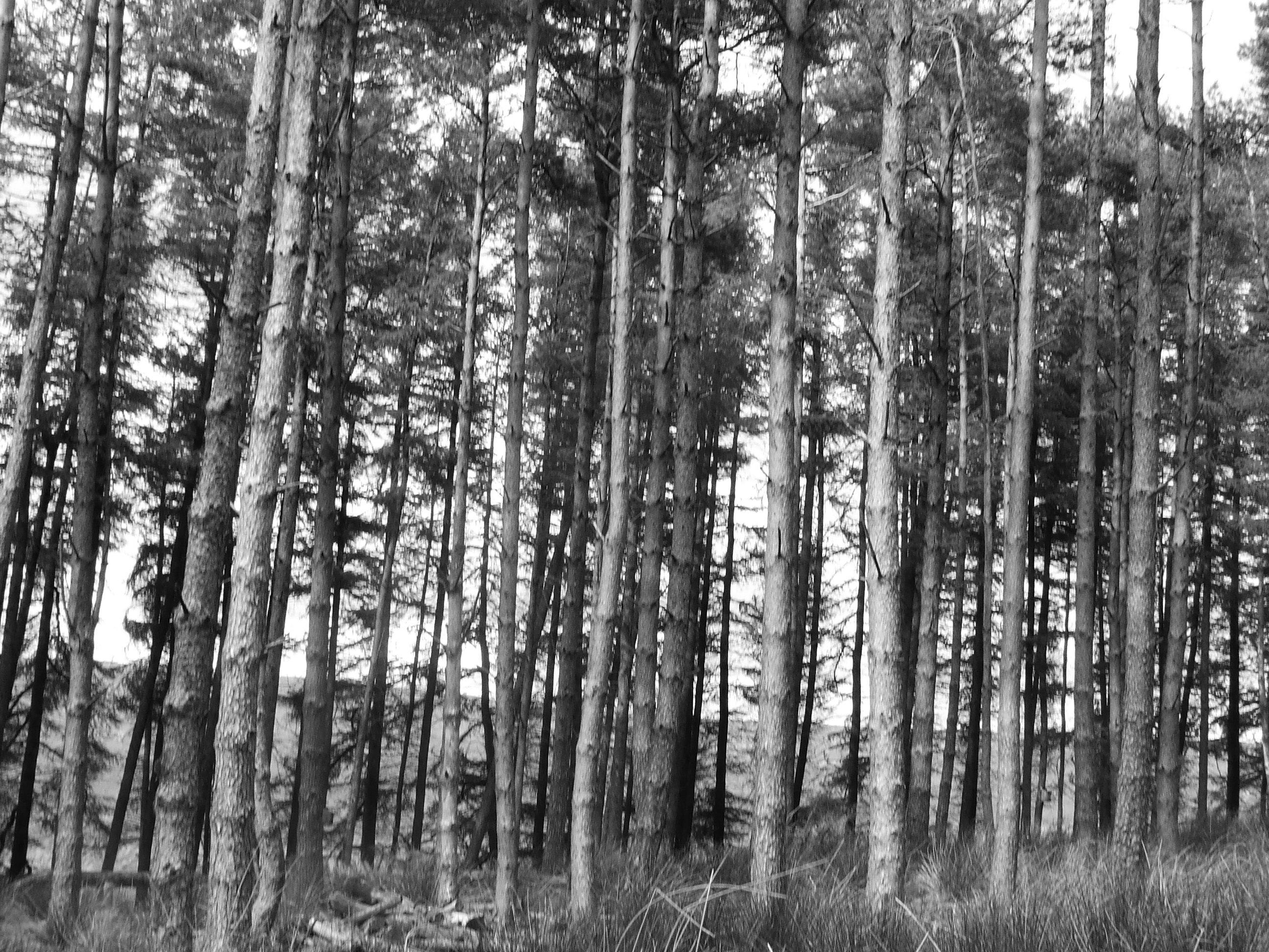 white pine black personals Morgantown materials - craigslist cl morgantown   materials  post account 0 favorites 0 hidden cl morgantown  favorite this post aug 22 flooring , white.