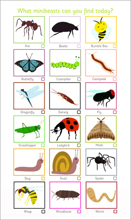 Minibeast Spotter Sheet | Free Early Years & Primary Teaching ...