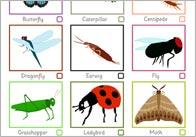 Minibeast Spotter Sheet