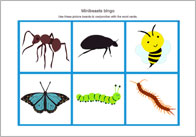 Minibeast Themed Bingo