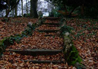 Steps in Autumn