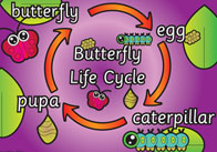 Butterfly life cycle thumb Butterfly Life Cycle Poster