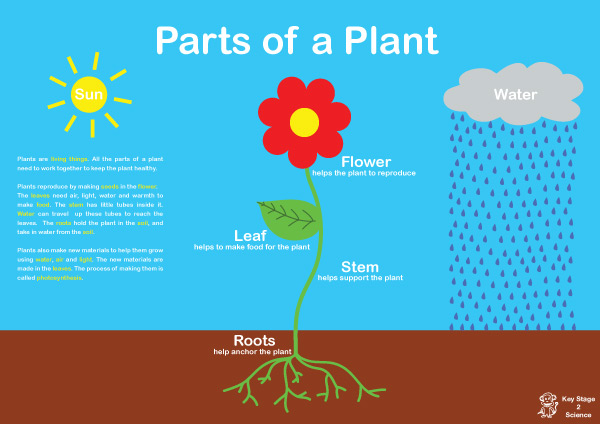 Parts of a Plant | Free Early Years & Primary Teaching ...