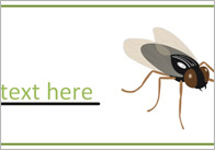 Editable Insect / Minibeast Labels