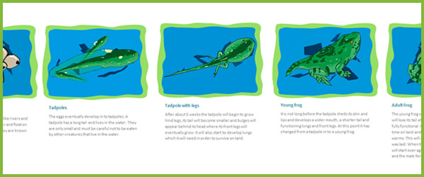 Life Cycle of a Frog : Free Early Years u0026 Primary Teaching ...