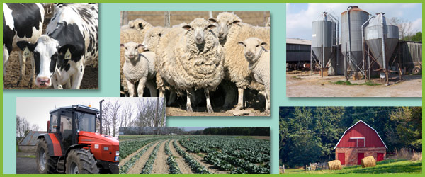 Farming Photo Pack Free Early Years Amp Primary Teaching Resources Eyfs Amp Ks1