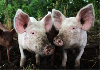 Farmyard Animals Photo Pack