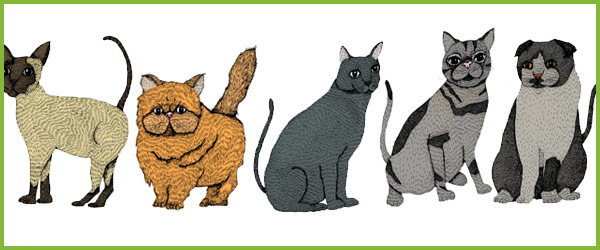 Cat Illustrations Free Early Years Amp Primary Teaching