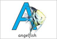 Under The Water Alphabet Cards