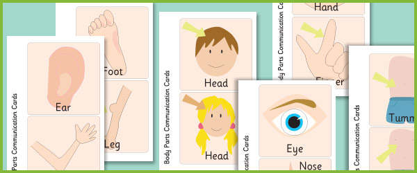 Body Parts Communication Flashcards