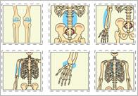 Bones Of The Body Bingo Cards