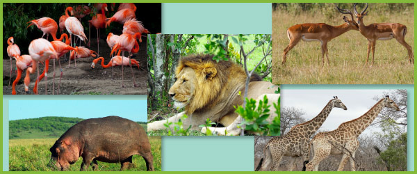 African photos: African animals and landscapes