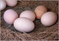 Egg Photo Pack