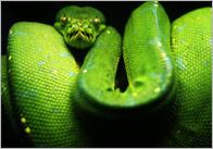 Snake Photo Pack