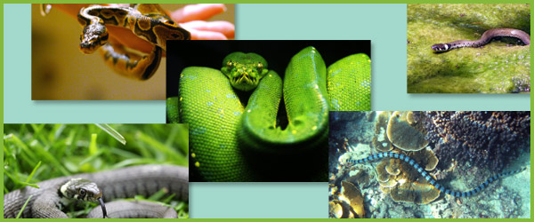 Snake photo collection