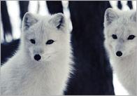 Winter Animals Photo Pack