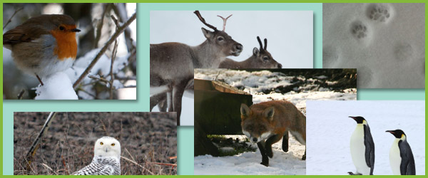 Winter Animals Photo Pack / Collection | Free Early Years ...