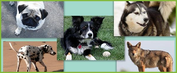 Dog Photographs