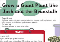 Grow a plant like Jack and the Giant Beanstalk