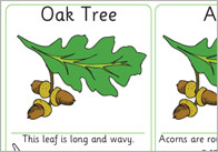 Matching Leaves and Seeds Activity