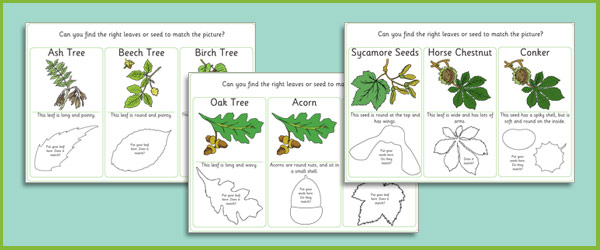 matching leaves and seeds game forest school resources free early years primary teaching. Black Bedroom Furniture Sets. Home Design Ideas