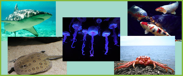 Under the Sea Photo Pack
