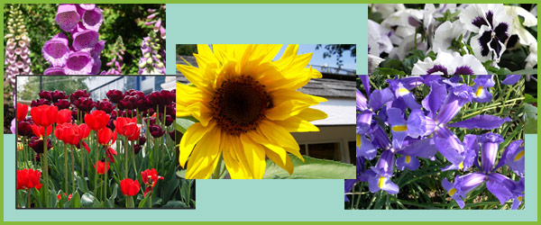 Flowers Photo Pack