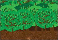 Goldliocks Small World Scenery – Part 2: Forest