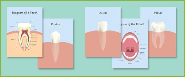 Teeth Posters