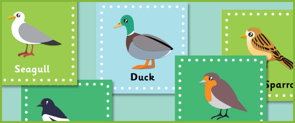 British bird posters