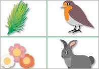 British Wildlife Bingo