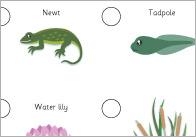 Pond-dipper