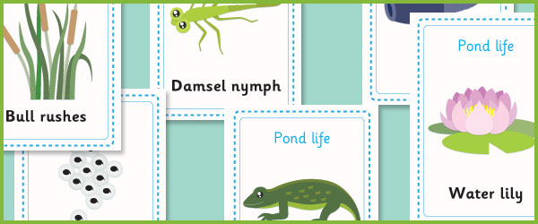 Pond life flash cards
