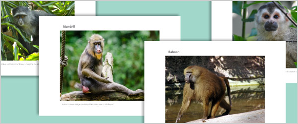 Monkey Photo Pack