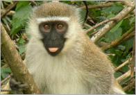 Monkey-photo-pack
