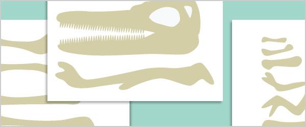 Dinosaur Bone Size Sorting