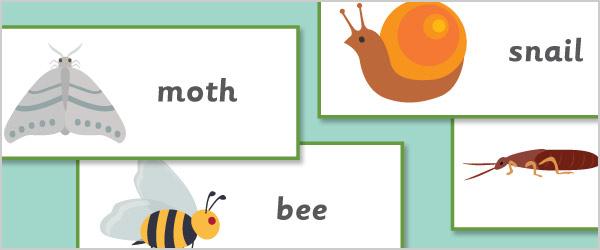 Minibeast Topic Cards