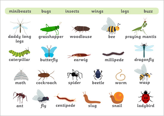Minibeast Word Mat Free Early Years Amp Primary Teaching