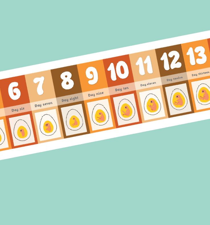 Chick Embryo Display Banner