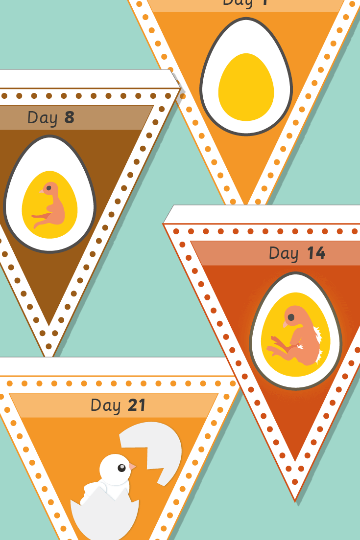 Chick Embryo Bunting