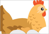 hen-life-cycle-posters