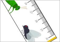 Minibeasts-Printable-rulers-thumbs