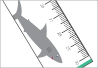 under-the-sea-printable-ruler