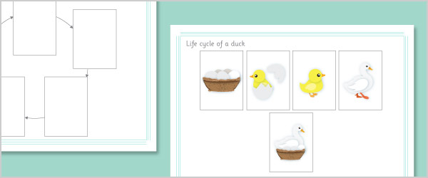 Duck Life Cycle Cut and Stick Cards
