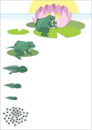 Frog Life Cycle Page Border