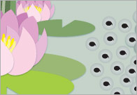 Life-Cycle-of-a-Frog-display-banner-01-thumb