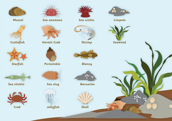 Rockpool Word Mat Free Early Years Amp Primary Teaching