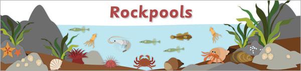 Rockpool Display Banner
